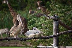 Fauna selvatica Fotografie Stock