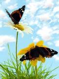 Fauna selvatica Immagine Stock Libera da Diritti