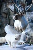Fauna selvatica Immagine Stock