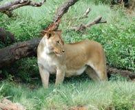 Fauna selvatica immagini stock