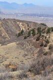 Fauna selvatica al parco di stato di Roxborough, Colorado Immagini Stock Libere da Diritti