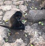 Fauna selvatica animale fotografia stock libera da diritti