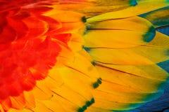 Fauna selvatica Costa Rica Dettaglio del primo piano delle piume del pappagallo Ara macao, ara Macao, dettaglio dell'ala, natura  Immagine Stock Libera da Diritti