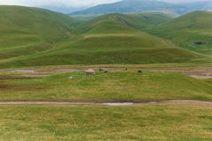 Fauna selvatica del Kazakistan Fotografia Stock
