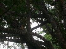 Fauna selvatica della Florida Fotografia Stock Libera da Diritti