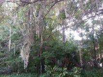 Fauna selvatica della Florida Fotografie Stock Libere da Diritti