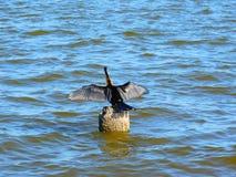 Fauna selvatica di Melbourne, Florida Immagini Stock