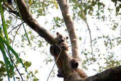 Fauna selvatica di Pantanal Immagine Stock