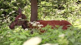 Fauna selvatica e conservazione della natura video d archivio