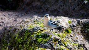 Fauna selvatica e natura in Madera Immagini Stock Libere da Diritti