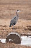 Fauna selvatica ed inquinamento Fotografia Stock