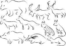 Fauna selvatica europea illustrazione di stock