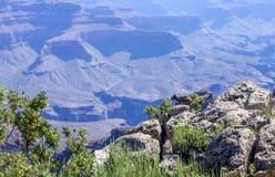 Fauna selvatica Grand Canyon dello scoiattolo fotografia stock