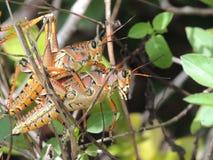 Fauna selvatica interessante fotografie stock