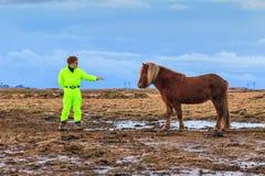 Fauna selvatica islandese fotografia stock
