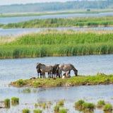 Fauna selvatica in Lettonia Fotografie Stock Libere da Diritti