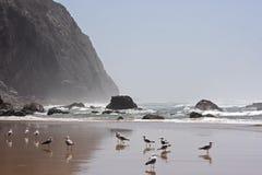 Fauna selvatica nel Portogallo Fotografie Stock Libere da Diritti