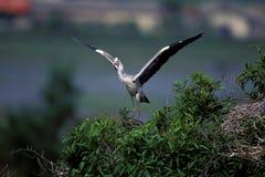 Fauna selvatica nella scena della natura Immagine Stock Libera da Diritti