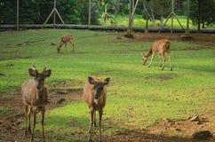 Fauna selvatica non così tanto nel selvaggio Fotografia Stock