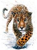 Fauna selvatica predatore degli animali dell'acquerello di Jaguar Immagini Stock