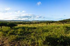 Fauna selvatica Safari Landscape Fotografie Stock Libere da Diritti