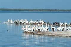 Fauna selvatica su Isla de los Pajaros, Messico Fotografie Stock Libere da Diritti