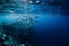Fauna selvatica in subacqueo con i tonnidi della scuola in oceano alla barriera corallina immagine stock libera da diritti