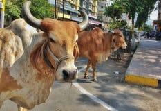 Fauna selvatica sulla strada Fotografie Stock