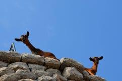 Fauna, Sky, Wildlife, Ecoregion Stock Image
