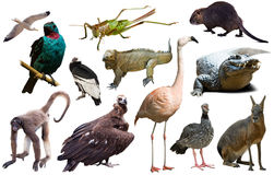 Fauna of South America isolated Royalty Free Stock Photo