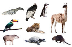 Fauna of South America. Set stock photography