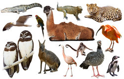 Fauna of South America set Stock Images