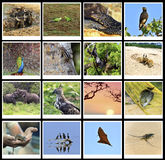 The fauna of Sri Lanka Stock Image