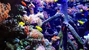 Fauna subacuática en un acuario del mar almacen de metraje de vídeo
