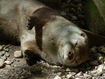 Fauna, Terrestrial Animal, Snout, Organism