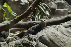 Fauna, Terrestrial Animal, Tree, Iguana stock photography