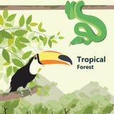 Fauna tropical del bosque de la vida del estilo de Eco del bosque Imagen de archivo