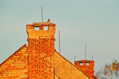 Fauna urbana, búho en la chimenea del tejado Pequeño búho, noctua del Athene, pájaro en el hábitat de la naturaleza, fondo claro  fotografía de archivo
