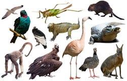 Fauna van geïsoleerd Zuid-Amerika Royalty-vrije Stock Foto