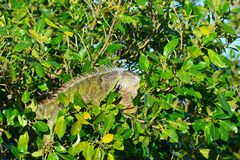 Fauna, Vegetation, Ecosystem, Nature Reserve stock image
