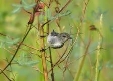 Fauna, Wildlife, Bird, Organism Stock Photos