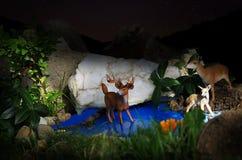 Fauna, Wildlife, Deer, Organism Stock Photos