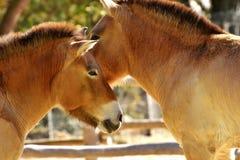 Fauna, Wildlife, Horse Like Mammal, Mane