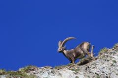 Fauna, Wildlife, Sky, Horn
