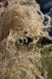 Fauna, Wildlife, Snout, Organism Stock Photo