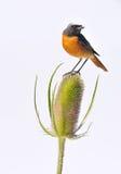 Fauna y planta aisladas. Fotos de archivo