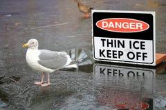 Fauna y señal de peligro fina del hielo Imagen de archivo