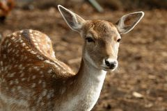 Fauna Royalty Free Stock Photography