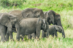 Faune - éléphant images stock