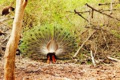 faune photographie stock libre de droits